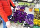 Kwiaty na balkon – jak wybrać najpiękniejsze?